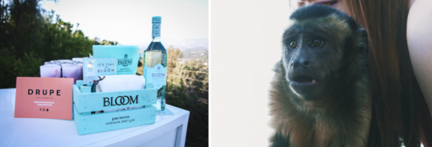 drupe_los_angeles_launch_party_monkey_bloomgin.jpg
